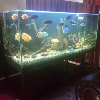 2 x Fish Tanks for sale