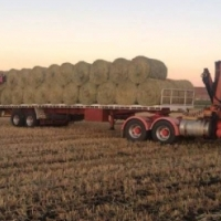 Large Round Hay Bales Available 340kg
