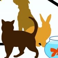 Pet Sitter:Edgemead,Monte Vista & Plattekloof Glen