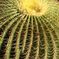 Kaktus en vetplante