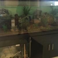 Huge Marine Fish Tank
