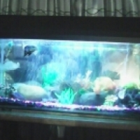 fish tank with fish and accessories for sale
