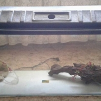 Fish tank with extras for sale.