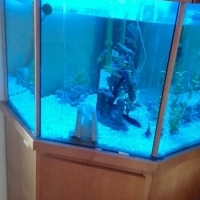 Fish Tank For Sale (250 Liter)