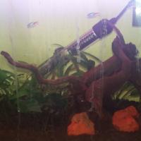 Planted aquarium including fish for sale