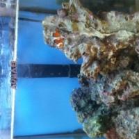 Nano marine aquarium