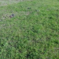 2Ha Vacant Land For Sale in Sir Lowrys Pass