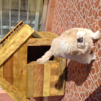 new dog kennels for sale