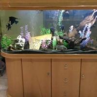 1.5 Compleet fish Tank