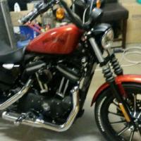 HARLEY DAVIDSON  Sportster Mini Ape 0828710817