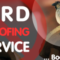 Birding Proofing, Treatments or Repellents/ Removals (Call Now)
