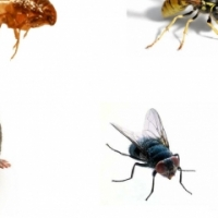 Rodents, Fly control, Spiders, Ants, Cockroaches, Termites, Weeds, Birds, Moles, Fleas, Bird removal