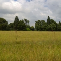 1.7 Ha Vacant Land in Delmas(Rietkol