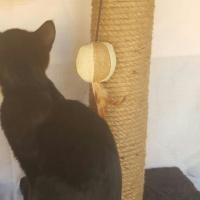 Cat Scratch post/ Kat krap pale