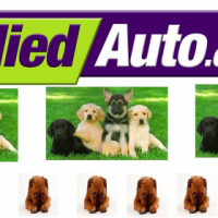 SHORT OF CASH TO BUY A NEW PET ? WE CAN HELP !!