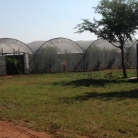 Operational Shadehouse and Openfield vegetable farm, training facility, with livestock facilities