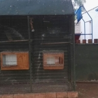 bird cage and bowls for sale