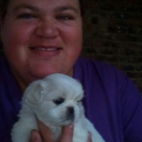 Pekingese Puppy for sale - male