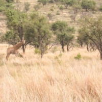 Price reduced!! 21 ha bushveld paradise close to all amenities! R880 000