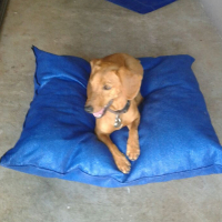 Pet Bebs For Sale - Stretcher beds and pillows