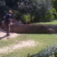 Tree Felling, Tree Care & Pest Control