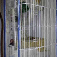 Cage plus accessories