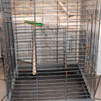 PARROT CAGE IN GOOD CONDITION  WITH OUT LEG..S