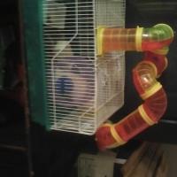 hamster hokkie te koop