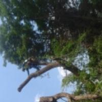 Mk Treefellings/Boomspings