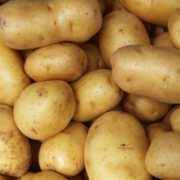 Fresh Potato - Wholesale Suppliers