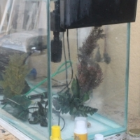 Fish Tank and Accessories Going For R999.00