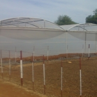 Multi span Greenhouse Tunnels