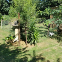Bachelors garden cottage