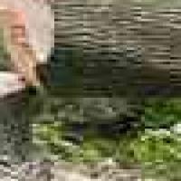 Bronkhorstspruit Tree Felling & Landscaping