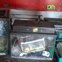 fish tank and accessories and reptile tenk