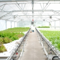 Business Opportunity – Hydroponic Greenhouses