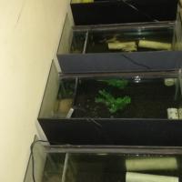 9x Breeding  aquarium/tank setup for sale