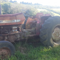 Massey Ferguson  Tractors Wanted, wanted, any condition.
