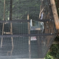 Suspended Aviary with nest box