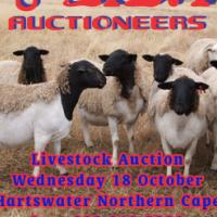 Livestock auction 18 October