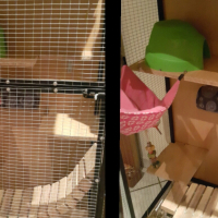 Pet cage with accesories and the cage is on wheels.