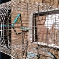 Birdcages and stands for sale