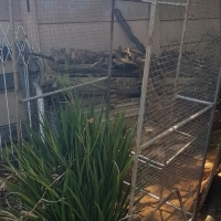 Aviary - Large Cage