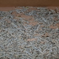 Silk Worms for sale