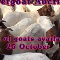 1000 Goat auction 25 October