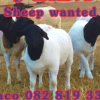 Your cattle and sheep wanted for the best prices