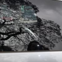 Mazda 5 rear quarter glass for sale!!!