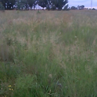 Two hectares Plot available in Honingnestkrans on the M38 Rooival road about 8km from Soshanguve.