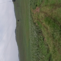 Farm for sale, sugar cane farm