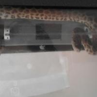 anaconda for urgent sale